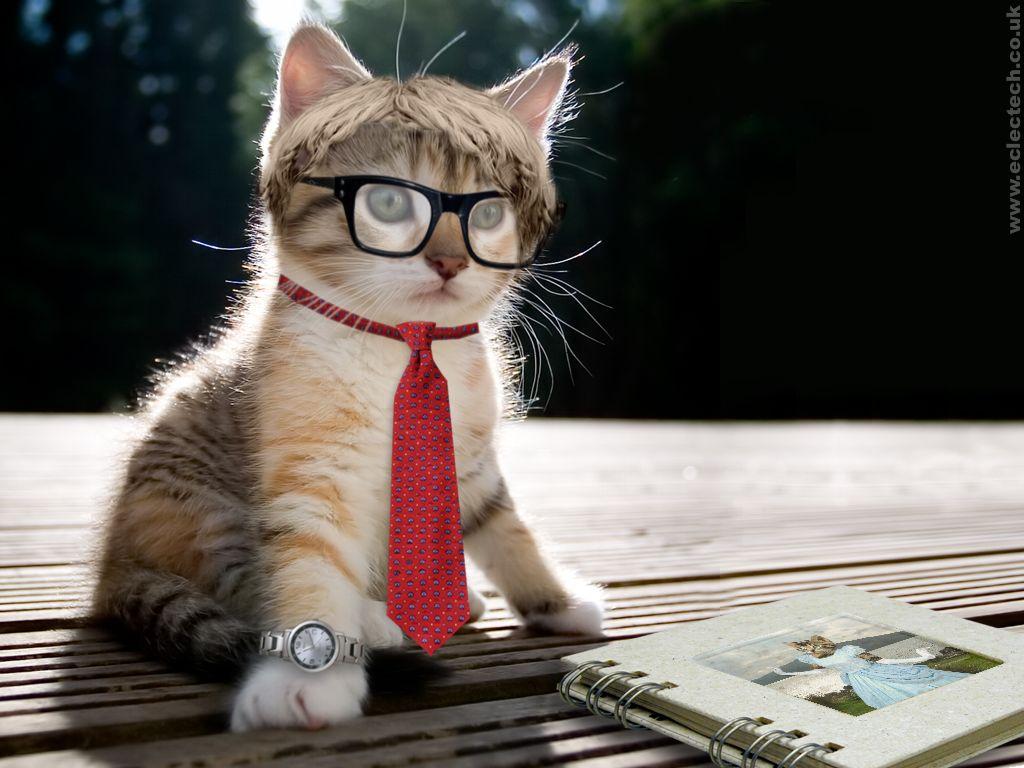 Gallery Foto Foto Gokil Dengan Meme Kata Kata Lucu Kucing